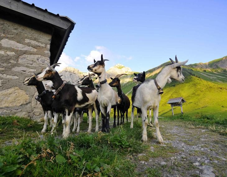 Lac Annecy Fromage visite terroir faverges