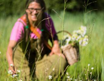 Lac Annecy Sortie plantes sauvages